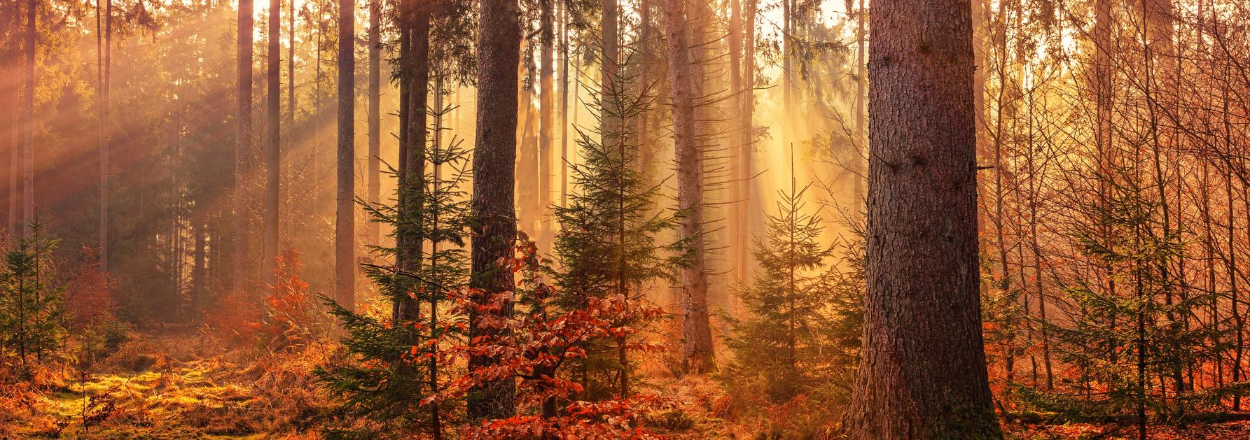 Bos met herfstkleuren