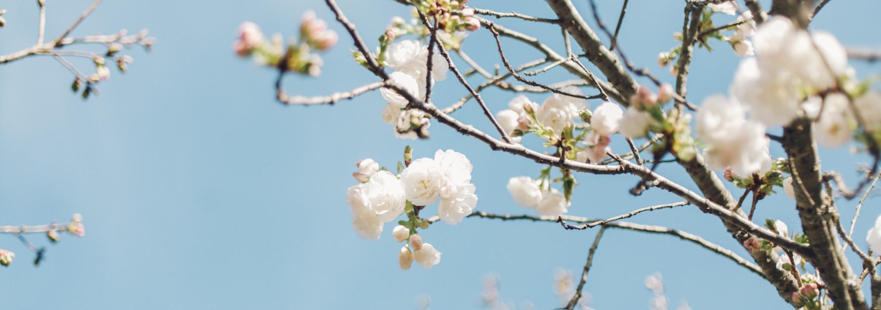 5 vrolijke lentewandelingen